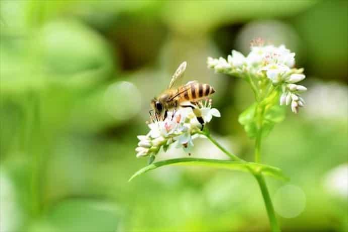 【そば蜂蜜コーヒー】蕎麦はちみつ効能と美味しい作り方
