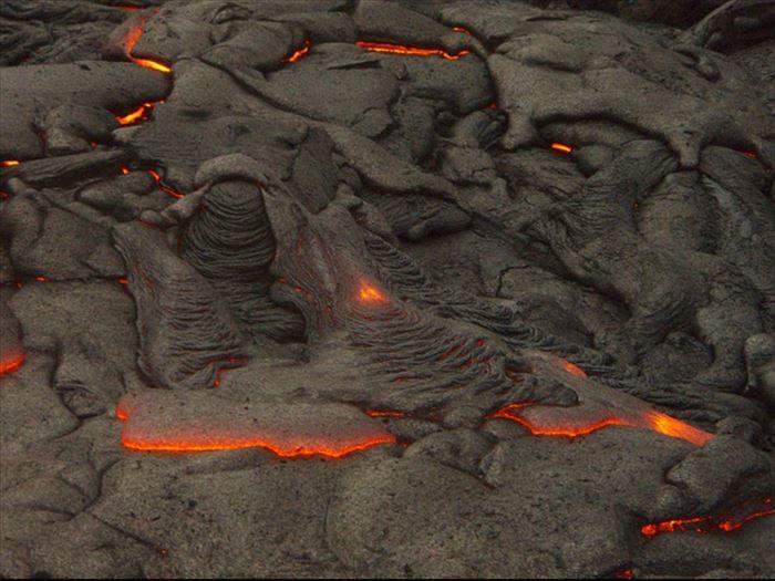 ハワイ島(コナ)の溶岩の固まった土壌に生息するコナコーヒー